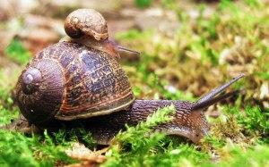 Mama Snail
